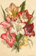 Botanical Prints from Vick's Monthly Magazine