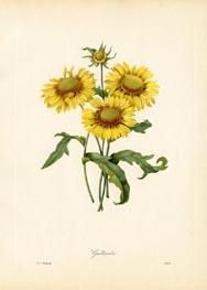 Blanket Flower Print (No. 11930021)