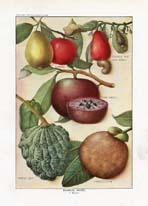 Fruit and Vegetable Prints - Food Encyclopedia