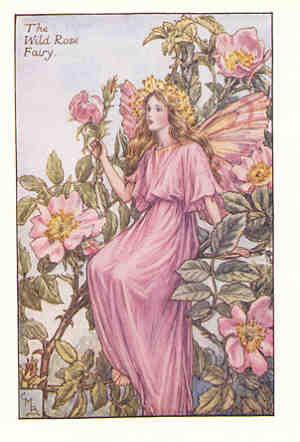Flower fairies of the summer 21107g 17126 bytes wild rose fairy mightylinksfo